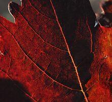 Bull Paddock Wines, Rutherglen - Autumn Leaves by Georgina James