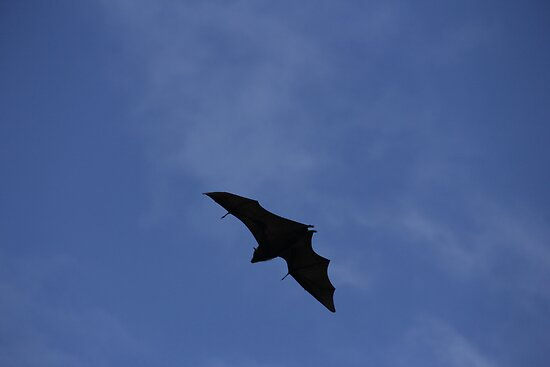 Flying Fox by Josephine Caruana