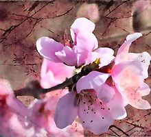 The Blossoms of Spring are Fleeting by Linda Lees