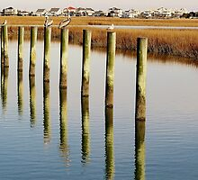 Pelican on Posts by Paulette1021