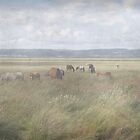 Horses grazing on the Gower by cofiant