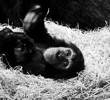 Playful Chimpanzee by Neil Clarke