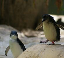 The littlest penguin by Laura McGrath