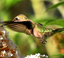 Feeding Hummer by Larry Trupp