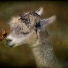 A Gentle Hello by KBritt