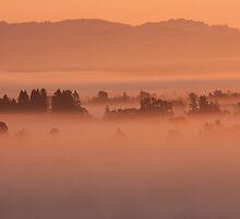 Champagne Fog - Laguna de Santa Rosa, CA by Alex Zuccarelli