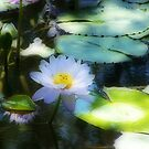 Water Lily Orton effect by Matthew Sims