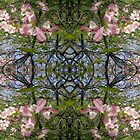 Kaleidoscopic Trees by Circe Lucas