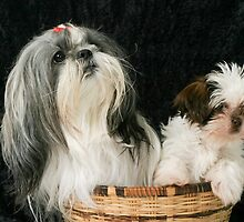 Dogs In A Basket by Ken  Hurst