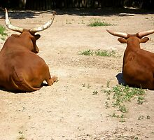 Wild buffaloes by qiiip
