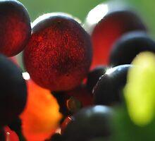 Bull Paddock Wines, Rutherglen - Sangio Glow by Georgina James