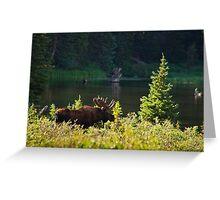 Moose At Brainard Greeting Card