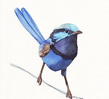 Blue Wren watercolor painting by Louise De Masi