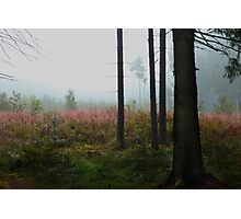 Forest meadow in mist Photographic Print
