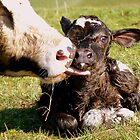 Welcome To The World My Son!! New Born Calf - NZ by AndreaEL