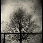Barren Tree by Derek Audette