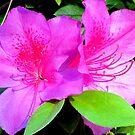 Pink on Purple by Nicki Baker