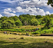 Bradgate Park by Mark Johnson