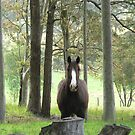 Horse In The Forest by louisegreen
