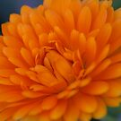 Orange Flower 2 by Jena Ferguson