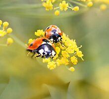 Bug Jam by missmoneypenny
