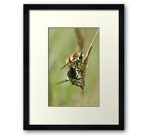 Bee Flies Framed Print