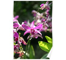 Summer Purple - Orchid Poster