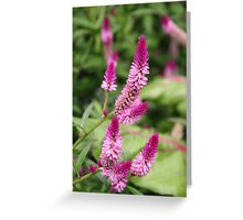 Summer Purple - Veronica Speedwell  Greeting Card