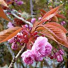 Gaeshi Cherry Blossom by TeaAira