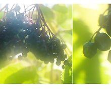 Sweet Memories of Summer by Denise Abé