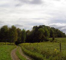 Alder Run Lane by Mark  Reep