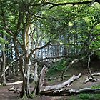 Beech Trees, Ben Lora by cuilcreations