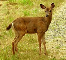 Little Deer still with spots! by Elaine Bawden