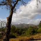 Urban Nature/Pasadena Daily Photo by Petrea Burchard