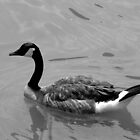 Goose in the water by Mechelep
