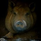 Pig Portrait by Jerry L. Barrett