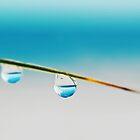 Two Drops by shuttersuze75