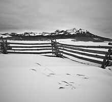 Harsh Winter by Ryan Wright