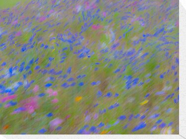The Flowers, Impressionist Photography by GrahamCSmith
