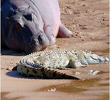 FRIENDS FOR......EVER, WITH MY SIZE... YES! - the Hippo's and the Crocodiles by Magaret Meintjes