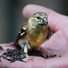 Goldfinch Fledgling& Niger Seeds... by Laurie Minor