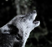 The Howl by Asab