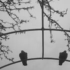 Pigeons waiting for better weather by Anitajuli