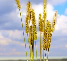 Inflorescence cereal weeds by qiiip