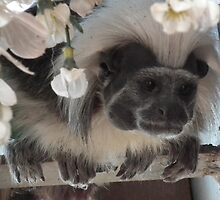 Tamarin Monkey by Julesdi88