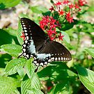 Butterfly Garden by Laurie Perry