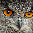 Eurasian Eagle Owl by Bill Maynard