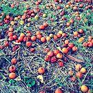 Pomme-surette by islefox