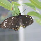 Butterfly 2 by JudeStarr