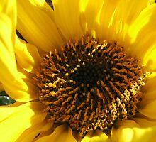 Sunflower Surprise by BlueMoonRose